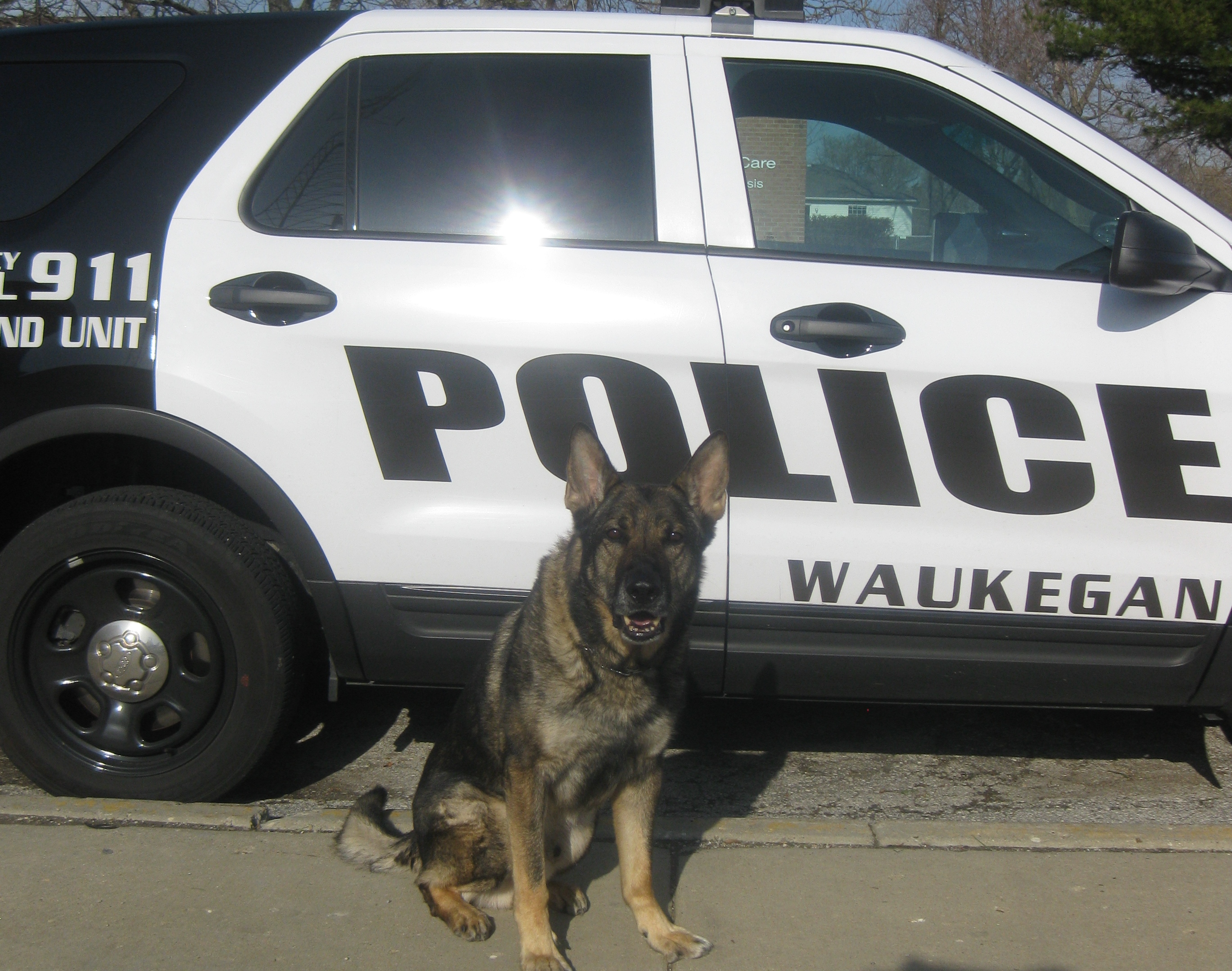 Photo of Canine Officer Matt